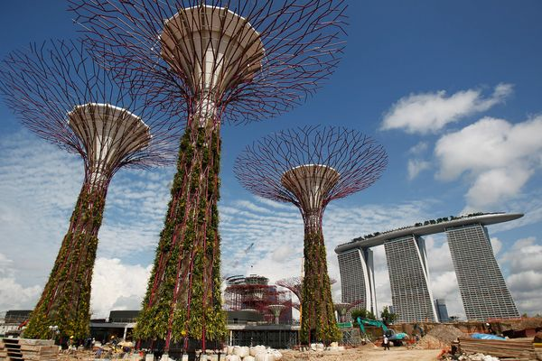 City Forest, Singapore (Photograph by Wong Maye-E, AP)